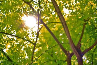 Frühlingswald – neue Heilmusik in healing formula