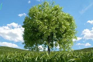 Aufrecht wie ein Baum - neue Übung in healing formula