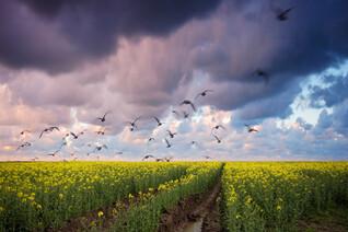 Neue Meditation in healing formula: Die Kunst des Wunderns